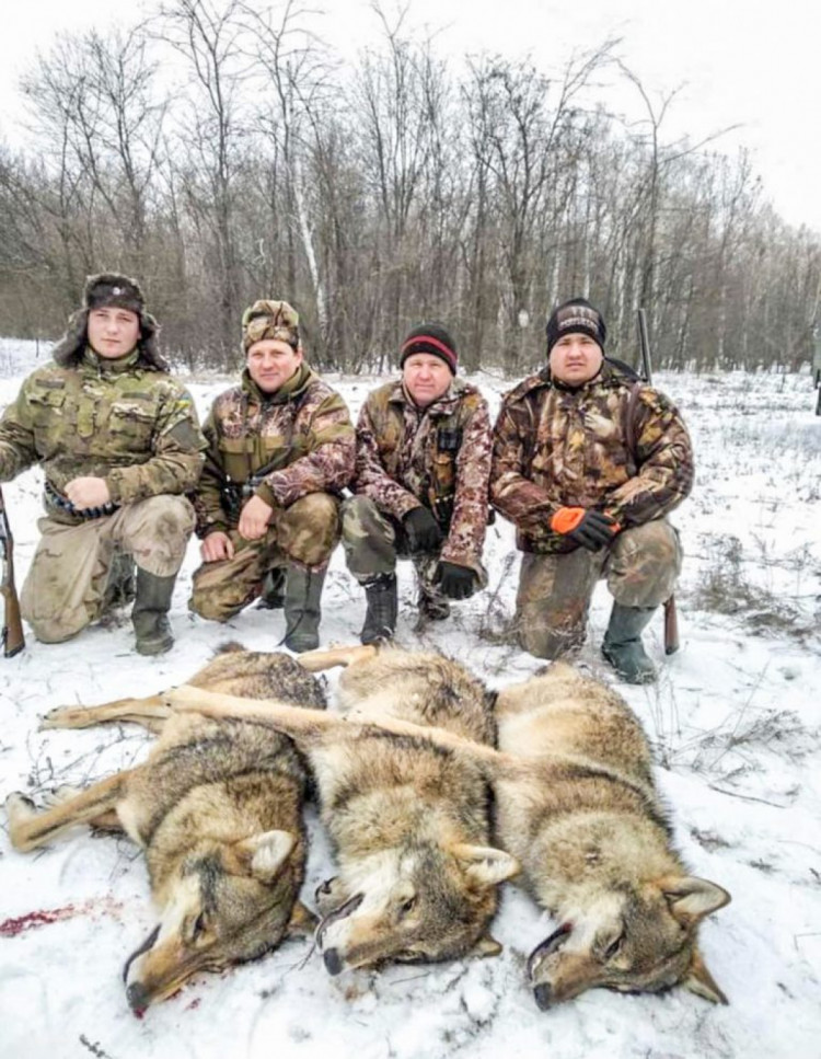 На Запоріжжі мисливці розстріляли зграю вовків